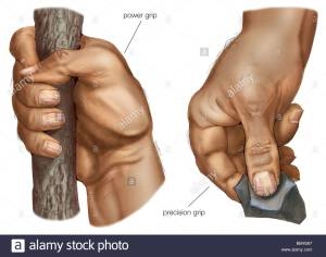 a-fully-opposable-thumb-gives-the-human-hand-its-unique-power-grip-BB4G67